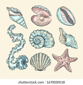 Vector cartoon set with seashells, pearl, seaweed and starfish. Vector collection in sketch style for your design. Isolated