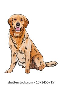Vector cartoon sketch portrait drawing of the whole body of a smiling yellow orange brown dog breed Golden Retriever.Sitting doggy vector outlined design illustration isolated on white background.