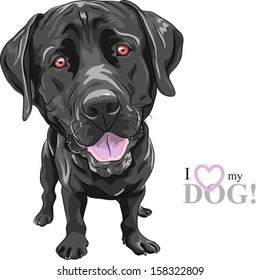 Vector cartoon smiling black dog breed Labrador Retriever