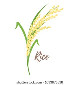 Vector cartoon style illustration of cereals - rice. Grain plant isolated on white background.