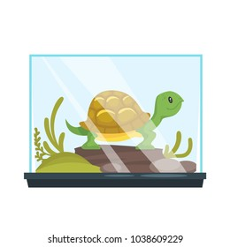 Vector cartoon style illustration of home animal pet - turtle in terrarium. Isolated on white background.