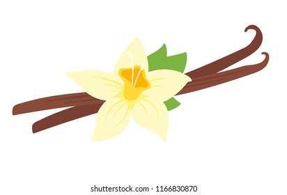 Vector cartoon style illustration of vanilla flower, isolated on white background.