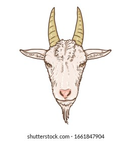 Vector Cartoon White Goat Head. Front View