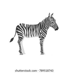 vector cartoon zebra isolated at white background, hand drawn illustration