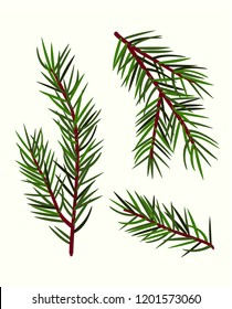 vector cartoons simplified stylized green pine branches of a pine tree