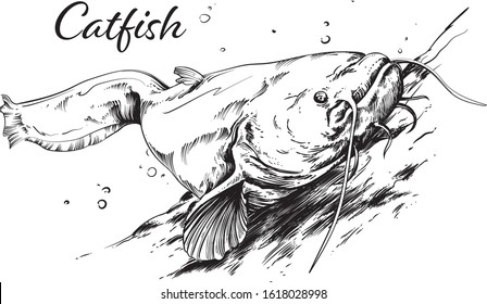 Vector catfish swimming in the river.
