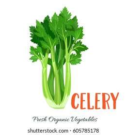 Vector celery. Vegetable illustration for farm market menu. Healthy food design