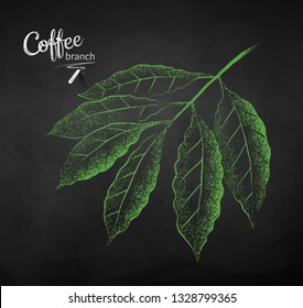 Vector chalk drawn sketch of coffee branch with leaves on chalkboard background.
