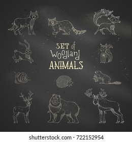 Vector chalk set of wild woodland animals on blackboard background. Cute deer, fox, hare, squirrel, hedgehog, moose, snail, wolf, beaver, bear and raccoon. Hand-drawn collection of mammals and bird.