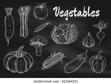 Vector chalk sketched vegetables on blackboard. Icons of pumpkin, asparagus and daikon, broccoli, tomato and pea, cabbage and corn, eggplant and garlic, pepper, beet. Vegetarian menu board elements