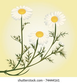 Vector Chamomile flower