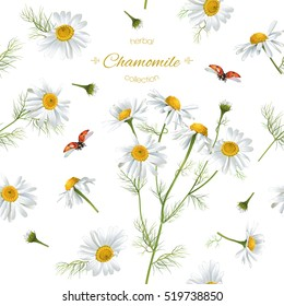 Vector chamomile flower seamless pattern with ladybug. Background design for herbal tea, natural cosmetics, health care products, aromatherapy, homeopathy. Best for print, wrapping paper
