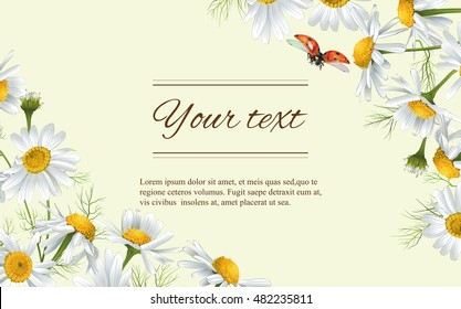 Vector chamomile flowers horizontal banner. Design for tea, natural cosmetics, beauty store, organic health care products, perfume, essential oil, homeopathy, aromatherapy. With place for text