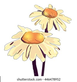 Vector chamomile illustration. Hand drawn flower. Camomile with artistic abstract effect. daisy wheel isolated on white background