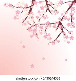 vector cherry blossom , beautiful pink flower