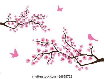 vector cherry blossom with birds