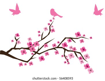vector cherry branch in blossom