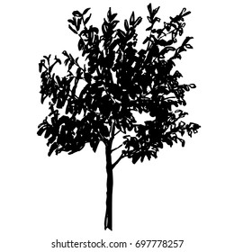 Vector cherry tree. Ink hand drawn silhouette. Black on white drawing