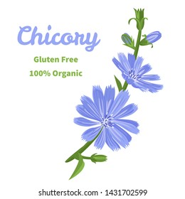 Vector chicory flower isolated on white background. Illustration of a flowering branch of a medicinal plant in a cartoon flat style.