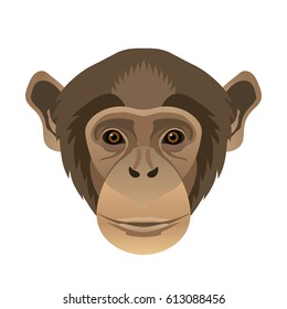 Vector chimpanzee face, portrait wild animal, zoo icon, isolated on white background