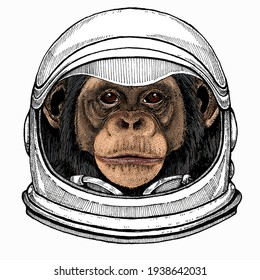 Vector chimpanzee portrait. Ape head, monkey face. Astronaut animal. Vector portrait. Cosmos and Spaceman. Space illustration about travel to the moon. Funny science hand drawn illustration.