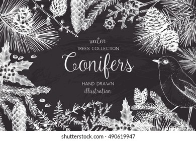 Vector Christmas design with conifers illustration on chalkboard. Vintage invitation or greeting card with hand drawn pine, spruce, cedar, cypress, fir, larch, juniper tree. Merry Christmas template