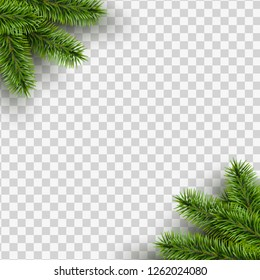 Vector christmas square frame with pine branches in the corners on transparent background with space for design.