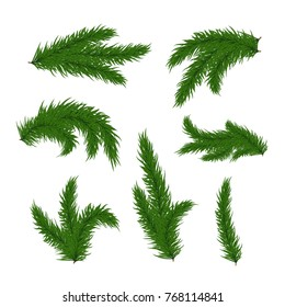 Vector Christmas tree branches set  for decoration. Spruce branches of different shapes.