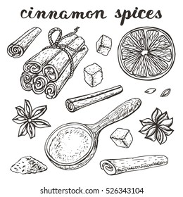 Vector Cinnamon spices.Vinyage hand drawn Doodle Outline. Sketch, Illustration. Oranges,star anise,cinnamon,sugar. Cafe ,spice shop,menu.Seeds and spices. Organic and fresh cooking background