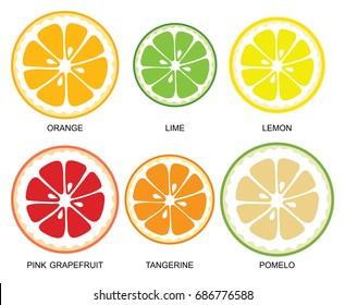 Vector citrus slices. Pieces of citrus fruits (orange, lime, lemon, grapefruit, tangerine, pomelo) on white background, collection of vector illustrations