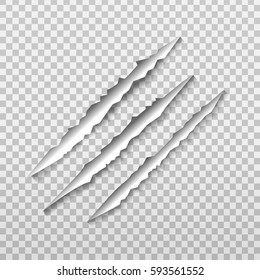 Vector claw scratch on the transparent background
