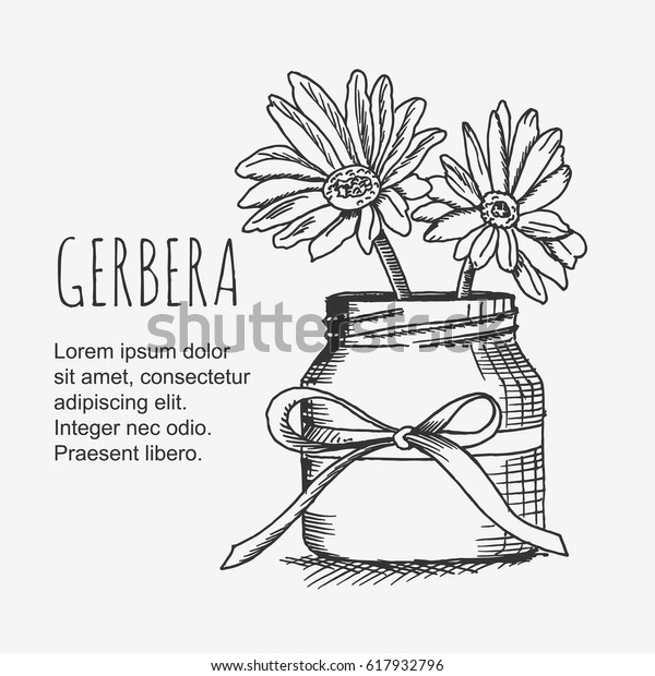 228 & Vector Clipart Gerbera Flower Vase Lineart Stock Vector (Royalty ...