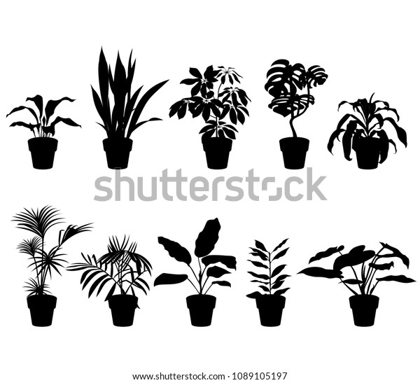 Free House Plant Cliparts, Download Free Clip Art, Free Clip Art on Clipart  Library