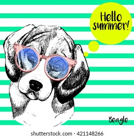 Vector close up portrait of  beagle dog, wearing the sunglasses. Bright hello summer beagle portrait. Hand drawn domestic pet dog illustration. Isolated on background with mint green strips.