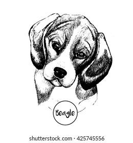 Vector close up portrait of beagle dog. Hand drawn domestic pet dog illustration. Isolated on white background.