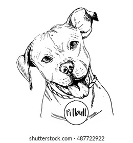 Vector close up portrait of english pitbull. Hand drawn domestic pet dog illustration. Isolated on  white background.