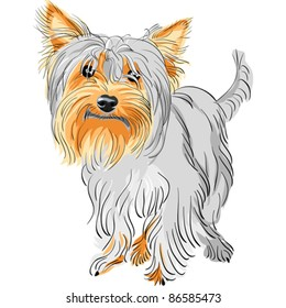 1000+ Yorkshire Terrier Drawing Stock Images, Photos ...