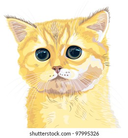 vector closeup portrait of the cute fluffy British cat, kitten lovely redhead with huge enormous eyes