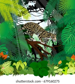 vector clouded leopard in jungle rainforest