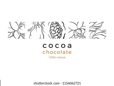 Vector cocao template Nature card Chocolate tree, branch, leaves, bean, grain. Natural sweet, organic drink, vegan fruit, bio food Hand drawn logo Art illustration on white background, cover, packing