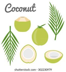 Vector coconut icon