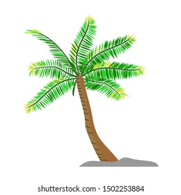 Vector coconut palm trees set isolated on white Premium Vector
