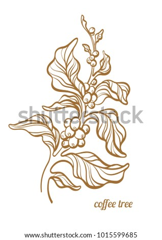 Vector Coffee Branch Leaf Coffee Beans Stock Vector Royalty Free
