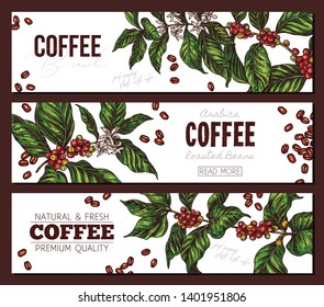 Vector coffee plants and tree horizontal color banners. Hand drawn sketch illustration. Design templates for advertising