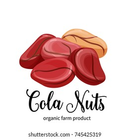 Vector cola nuts in cartoon style for template label, packaging snack and emblem farmer market design.