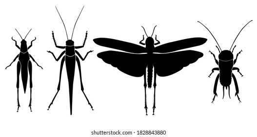 Vector collection of 4 Orthoptera insects silhouettes. Mantis, grasshopper, locust, cricket. Minimal graphic illustration.