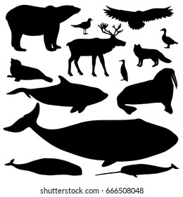 Vector collection of Arctic animals, includes 13 black silhouettes. Monochrome set isolated on white background