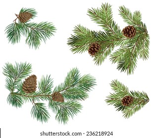 Vector collection of Christmas tree branches with pine cones