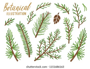 Vector collection of conifer branches. Botanical set of spruce elements. Isolated on white.