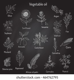 Vector collection of different oil plants. Hand drawn set
